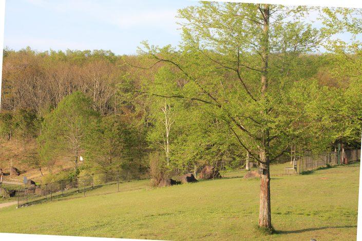 レジーナの森 風景